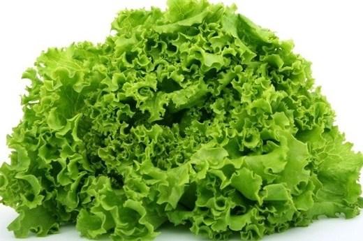Công dụng cây rau diếp trong Y học cổ truyền