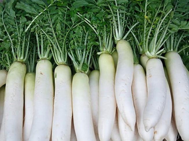 Công dụng chữa bệnh cửa củ cải trắng